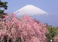 Explora Japon Parte 1 Nature1