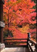 Explora Japon Parte 1 Nature6