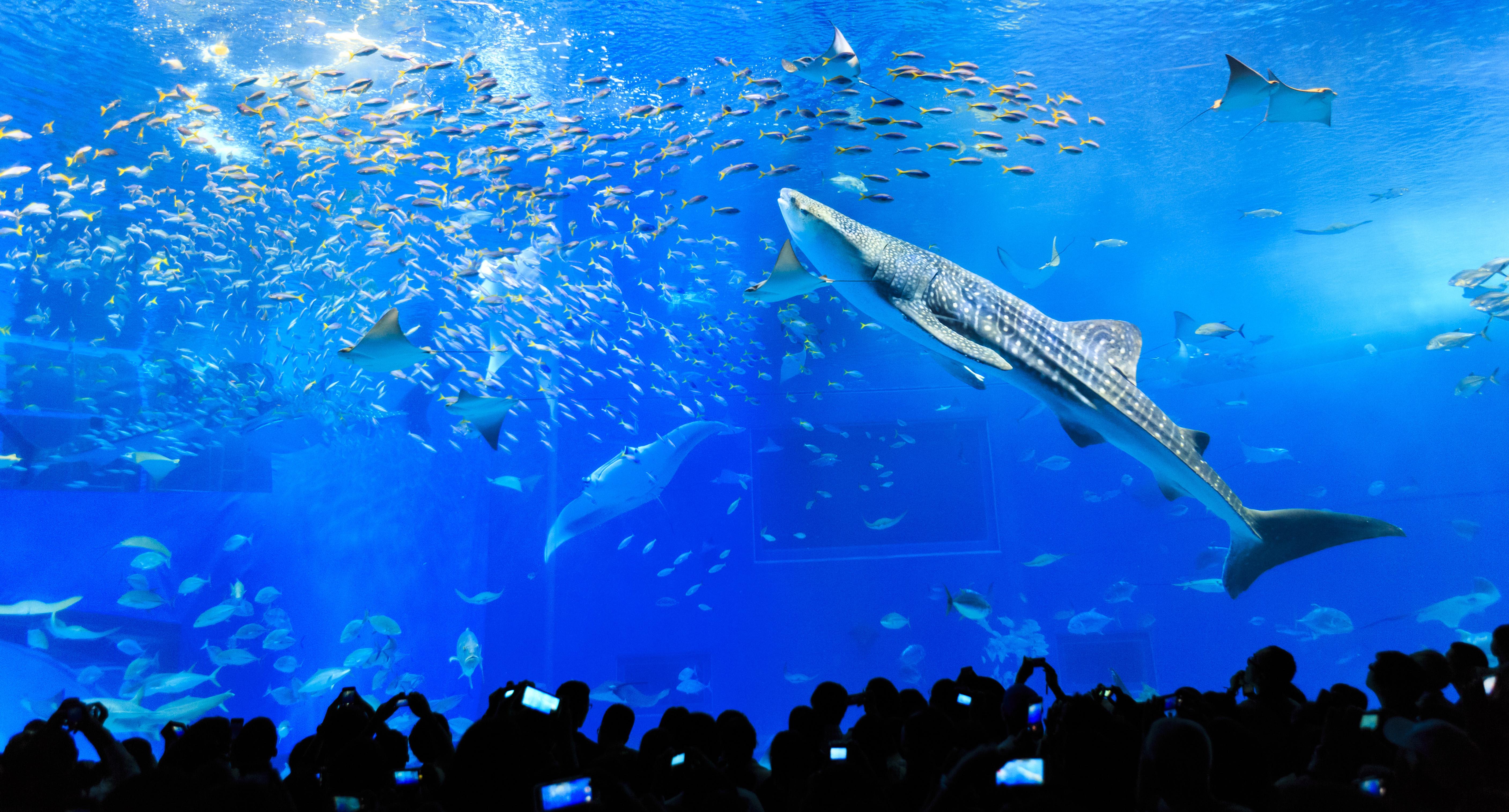 Aquariums Made Attractive through the Power of Technology - Hi-tech - Kids Web Japan - Web Japan