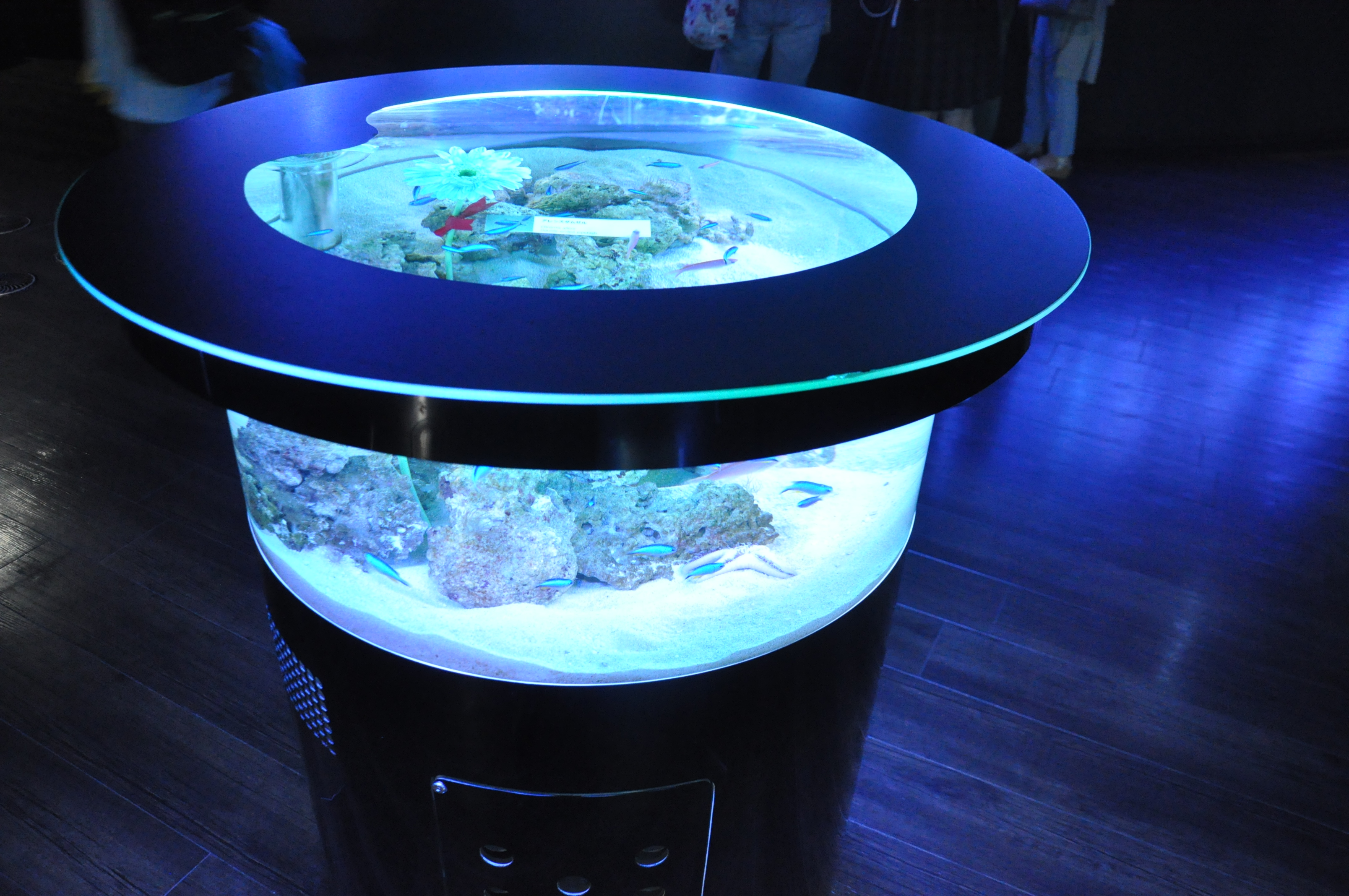 Aquariums Made Attractive Through The Power Of Technology