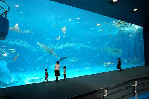 Acrylic Panels for Aquariums - Hi-tech - Kids Web Japan - Web Japan