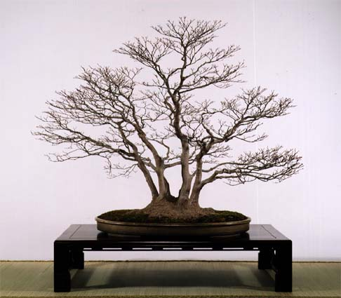http://web-japan.org/kidsweb/ja/virtual/bonsai/images/momiji.jpg