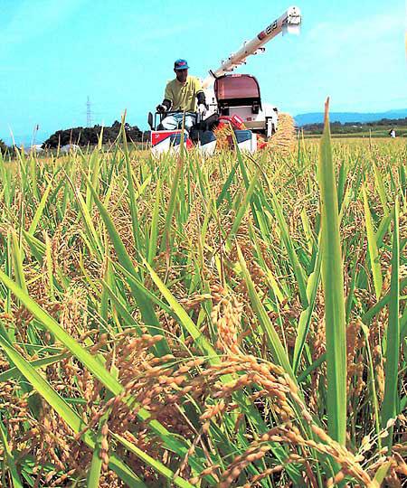 как выращивают рис в россии прошу сотрудничать Израилем