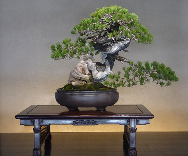 Bonsai Fashion Trends In Japan Web Japan