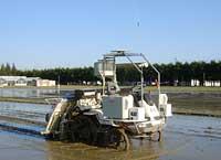 robot menanam padi